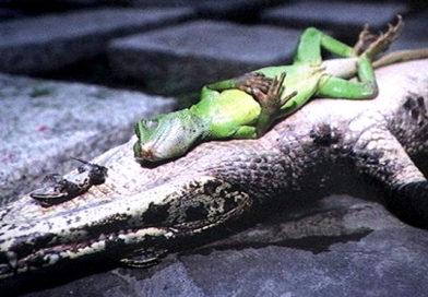 動物催眠影片示範