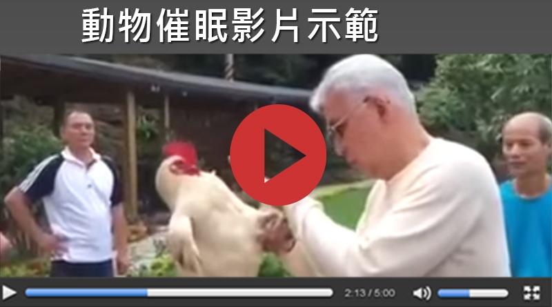 【動物催眠影片示範】